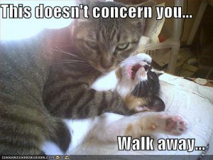 funny-pictures-cat-strangles-cat