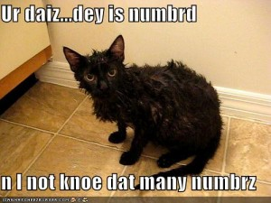 funny-pictures-wet-cat-counts-your-days