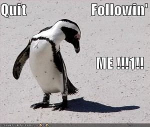 funny-pictures-penguin-tells-shadow-quit-it