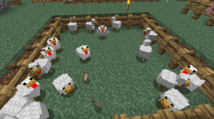 My chickens.